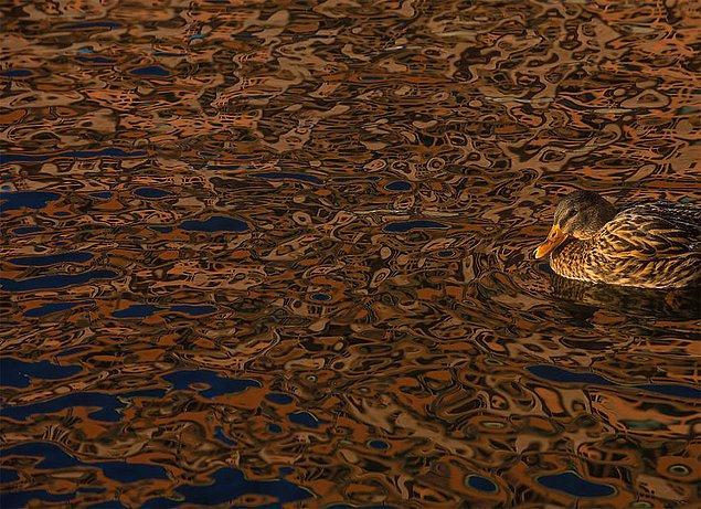28. Camouflage (Kamuflaj) - Daniel Stenberg, İsveç, Çevredeki Kuşlar Kategorisinde Şeref Ödülü