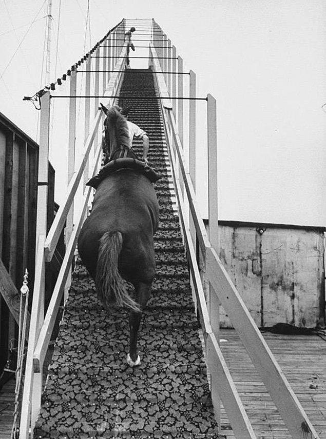 8. Dimah isimli at 12 metreden suya dalış yapmak için platforma çıkıyor.