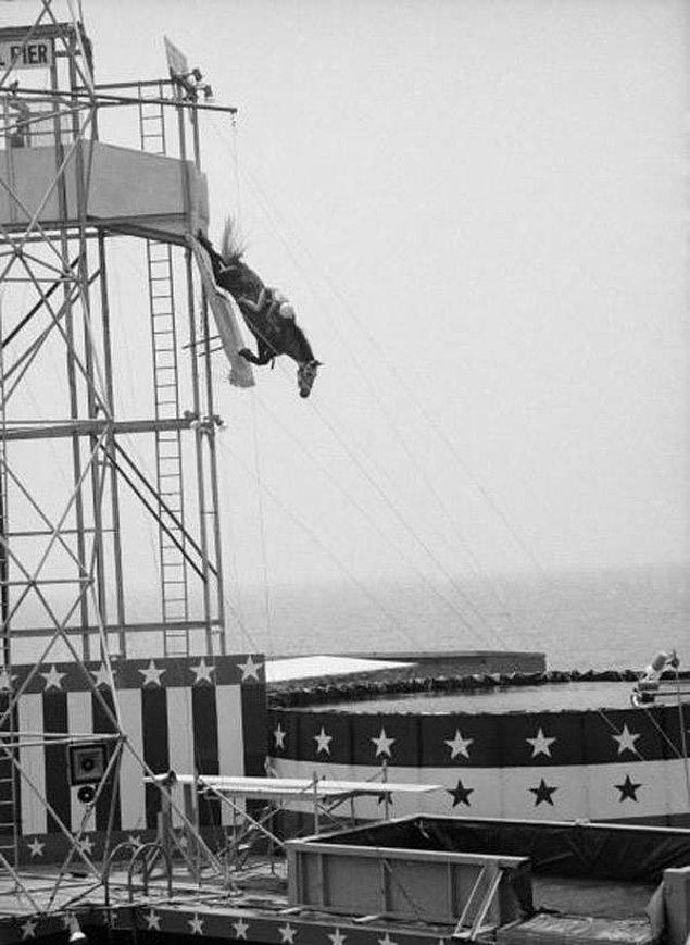 12. At ve binicisi kendilerini suya bırakıyor Atlantic City 1969.
