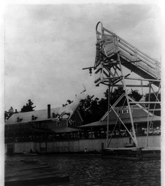 19. King adlı at 1909 yılında suya dalarken.