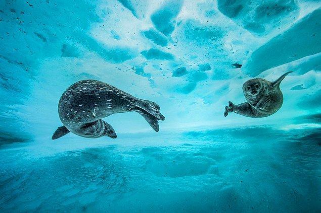 9. 📸 Laurent Ballesta, Antarktika