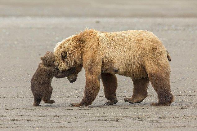 15. 📸 Ashleigh Scully, Alaska