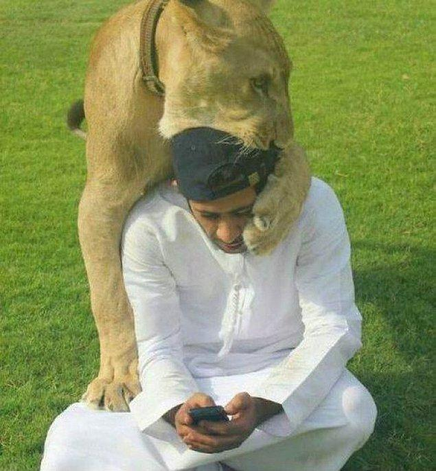 5. Sahibinden ilgi isteyen bir aslan. Kedigillerden olduğu nasıl da belli değil mi?