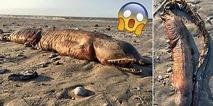 Harvey Kasırgası Sonucu Teksas Kıyılarına Vuran Ne İdüğü Belirsiz Deniz Yaratığı