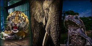 Vahşi Doğaya Hayranlığınızı Nirvanaya Çıkaracak 21 İnanılmaz Fotoğraf!