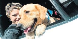 Göz Göre Göre: Otobüsün İkram Kabinine Konan Köpek Odin Havasızlıktan Can Verdi
