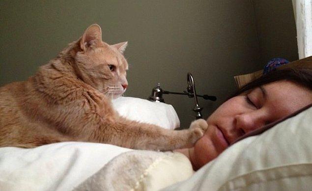 10. Eğer bir kedi dostunuz varsa, çalar saate bile ihtiyaç duymazsınız!