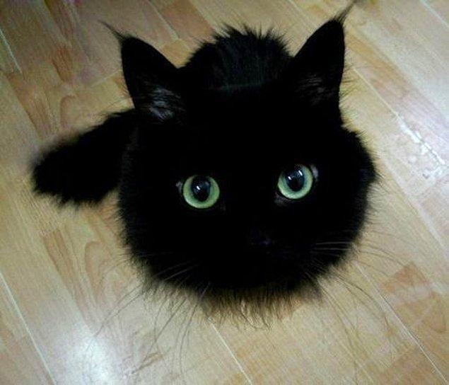 2. Kara kedi mi o?! Eğer bir yerlerde kara kedi gördüysek eyvahlar olsundu.