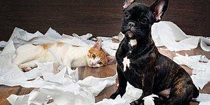 Kedi-Köpek Dostlarımızla Birlikte Yaşarken Evin Temizliğinden Ödün Vermemek İçin 11 İpucu