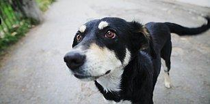 Cezalar Caydırıcı mı Öğretici mi Olmalı? Sokak Köpeğine Şiddete 'Hayvan Hakları' Okuma Şartıyla Af