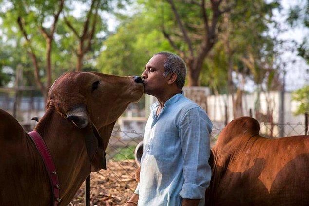 Hindistanlı adam, ineklere karşı beslediği aşırı sevgi nedeniyle hayatını tamamen değiştirmiş.