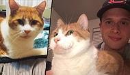 Genetik Farkı Yüzünden Minnak Patilerinde Başparmağı Olan Kedicik Marino ile Tanışın!