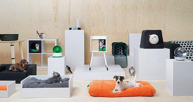 Yeni kreasyonun içinde koltuk örtülerinden kedi köpek yataklarına, oyuncaklara birçok evcil hayvan ürünü var.