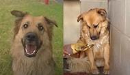 Haklı Sebeplerden Dolayı İnsanlardan Aşırı Korkan Köpeğin Zaman İçinde Yaşadığı Büyük Değişim