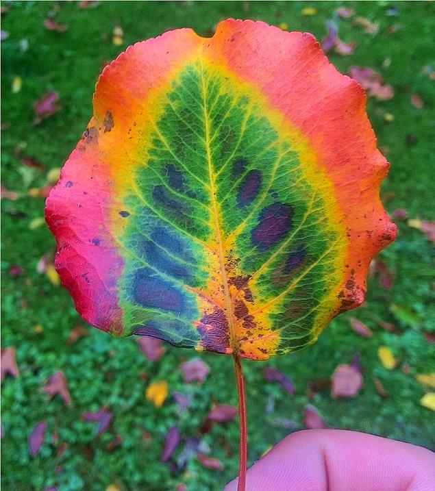 Gökkuşağındaki tüm renkleri barındıran bu ölü yaprak