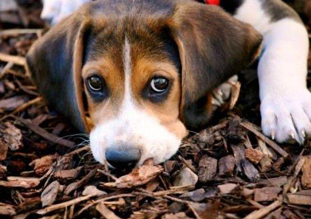 İtalya'nın oldukça katı hayvan hakları kanunlarına göre, hasta evcil hayvanlarıyla ilgilenmeyen, onların eziyet çekmesine izin veren kişiler 1 yıl hapis ve 10.000 avro kadar para cezasına çarptırılabiliyor.