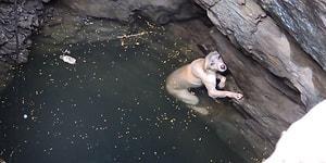 Düştüğü Kuyudan Güzel İnsanlar Tarafından Kurtarılan Köpek