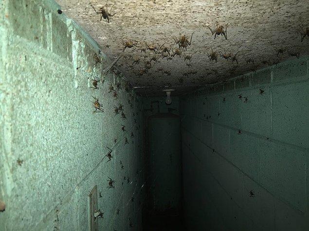 3. Filmden bir kare değil! Bir evin bodrumundan elde edilmiş bir görüntü...