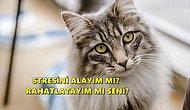 Bir Kedi Sahibi Olmanın Bilimsel Olarak Kanıtlanmış 10 Süper Ötesi Faydası