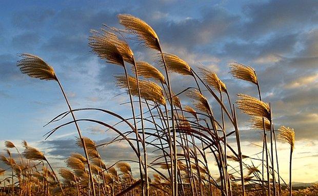 Sert bir rüzgar.
