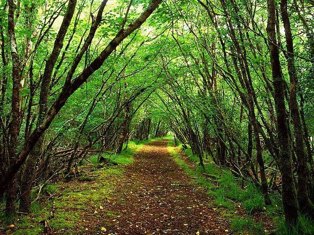 Geniş bir orman.