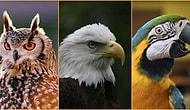 Dünyaya Kuş Olarak Gelsen Hangi Kuş Olurdun?