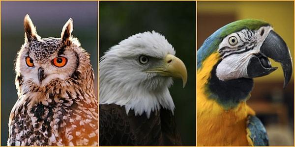 Dünyaya Kuş Olarak Gelsen Hangi Kuş Olurdun Onediocom