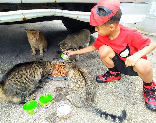 Shon, kedileri besliyor, ortada bir problem varsa çözmelerine yardımcı oluyor.