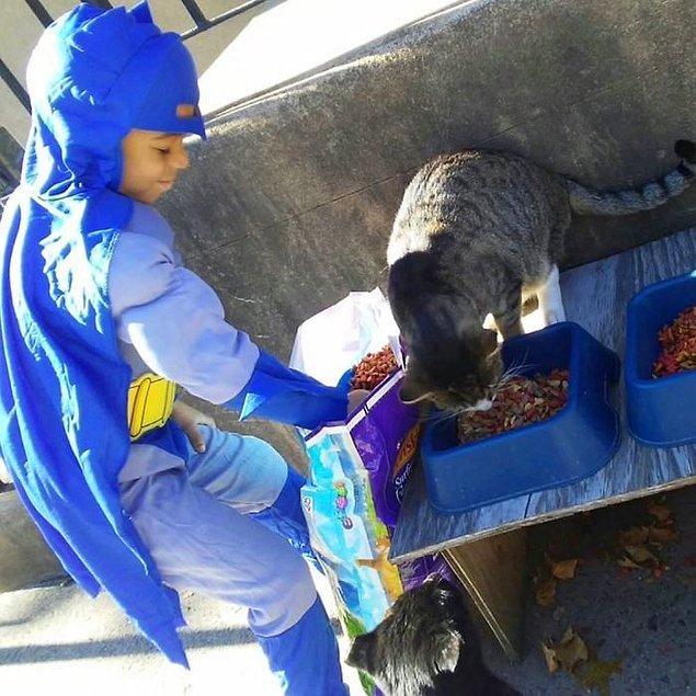 Kris ve nişanlısının bile kendilerine dokunmasına izin vermeyen bazı kediler, Kedi Adam'la çok kolay bağ kurabiliyor.