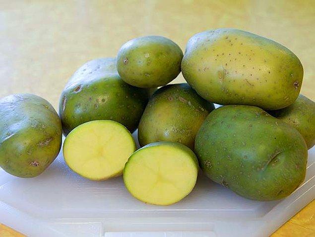16. Yeşil patates, solanin zehirlenmesinin en yaygın nedenlerinden biridir.