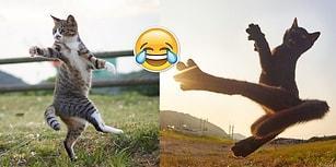 Japon Fotoğrafçı Maharetini Konuşturdu! Dövüş Sanatı Ustası Kedilerden Akıl Almaz Pozlar