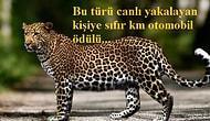 Türkiye'nin Belki de En Gizemli Canlısı Olan Anadolu Parsı Hakkında Bilmediğiniz Çok Şey Var!
