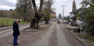 🍁 Çaycuma Belediyesi'nden Alkışlanacak Hareket: 'Meşeler Kesilmesin' Diye Yol Projesi Değişti