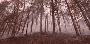 Testi Adım Adım Çöz ve Bu Tehlikeli Ormandan Sağ Çıkabilecek misin Gör!