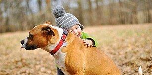 Zaten Biliyorduk, Bilim İnsanları da Doğruladı: Köpekleri İnsanlardan Daha Çok Seviyoruz!