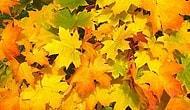 Sonbahar'ın etkilerini yaşadığımız şu günlerde doğadaki izlerini nasıl gözlemleriz? #doğakaşifi