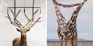 Hayvanlar Alemini Birbirinden İlginç Montajlarla Yeniden Yorumlayan Sanatçıdan 15 Çalışma