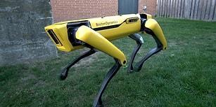 Boston Dynamics'ten SpotMini Robotuna Güncelleme Geldi: Karşınızda Yeni SpotMini