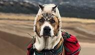 İnsanlarıyla Birlikte Seyahat Maceralarına Çıkan Kafadarlar Henry ve Baloo'ya Aşık Olacaksınız!