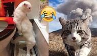 Kedilerin Gündelik Şapşallıklarıyla Dolu, Günlük Kahkaha Dozunuzu Karşılayacak Snapler 😂