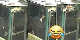 Akrobatik Hareketlerle Kafesten Kaçarak Özgürlüğüne Kavuşan Köpek