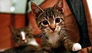 Kediye İşkence AYM'ye Gidiyor: 'Sahipsiz Hayvanlara Yönelik Suçlar TCK Kapsamına Alınsın'