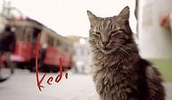 Time Yılın En İyi Filmlerini Belirledi: Ceyda Torun'un Çektiği 'Kedi' Beşinci Sırada