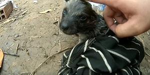 Boğulmak Üzere Olan Yavru Köpeği Kurtararak Tekrardan Hayata Döndüren Güzel İnsan