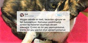 Gaziosmanpaşa'da Kediye Tecavüz: Müjgan İnsanlardan Kaçıyor, Suçlu Hâlâ Aramızda Dolaşıyor