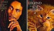 Müzisyen Kediler! Efsanevi Albüm Kapaklarındaki Başrolü Minnoş Tüy Yumakları Alırsa? 😻