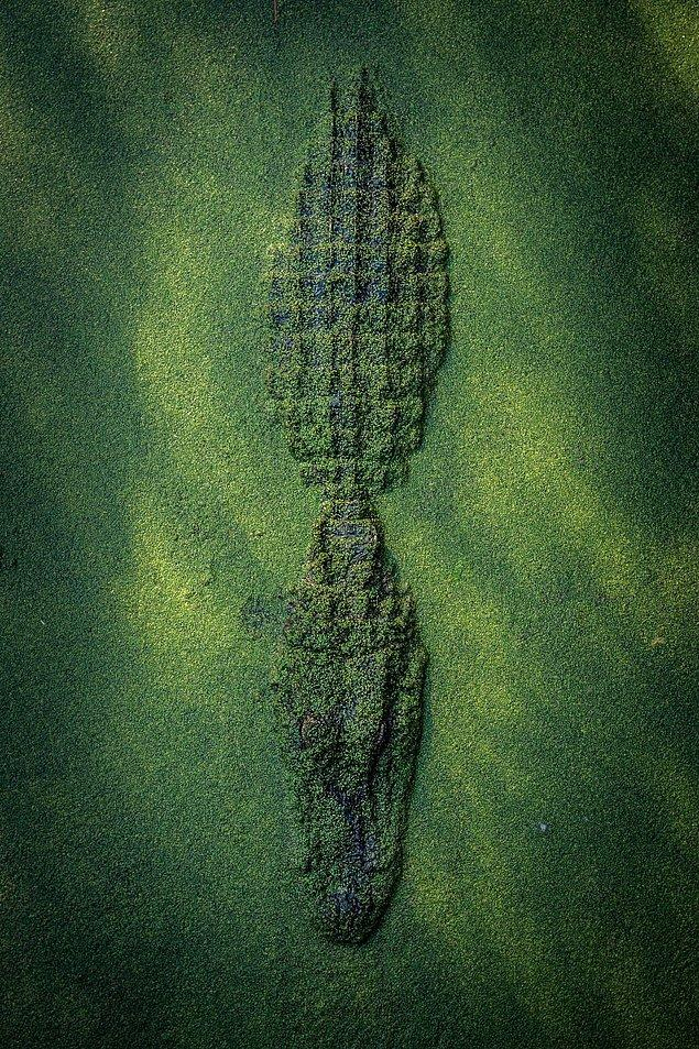 6. Doğa Ananın Kamuflajı - Cole Frechou