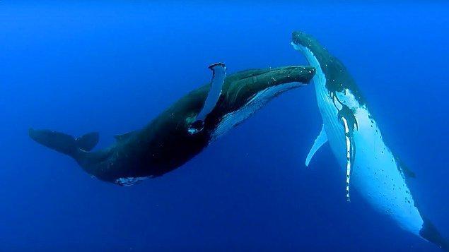 7. Uykuya dalma sorunları yaşıyorsanız, balina sesleri dinleyin.