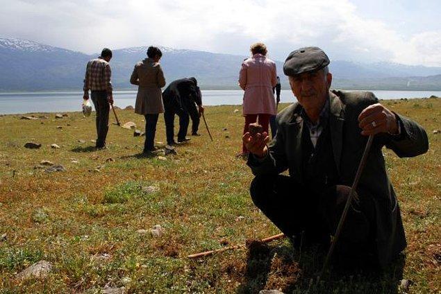 10. Elazığ'ın bir köyünde yağmurlarla toprak üstüne çıkan bu besin maddesi, kilosunu 40-50 lira arasında satılarak köylülerin bu dönemdeki geçim kaynağı oluyor.