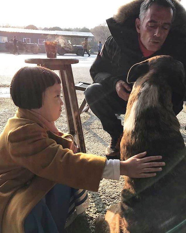 12. Bazen bir köpek severken...
